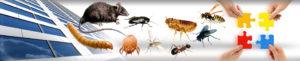 رش مبيدات .. شركه الخويلدي للمقاولات العامه و خدمات المنازل و رش مبيدات و كشف تسربات المياه و عوازل الأسطح .. 0564775374 .. 0550823514